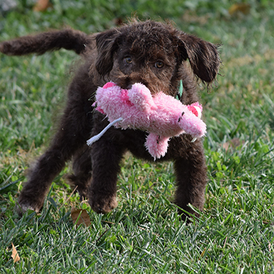 Maria-Puppies-8-1-16