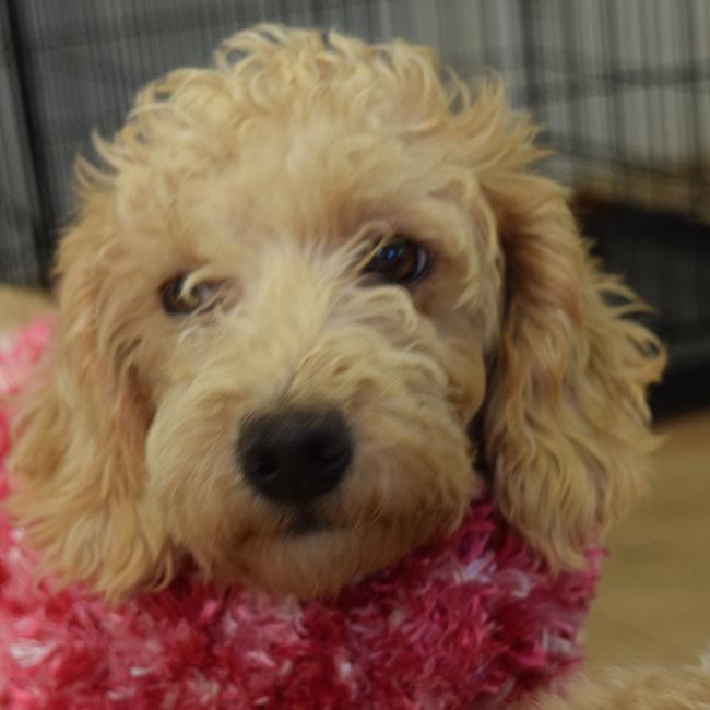 Becca-Puppies-10-4-16